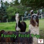 Family Field Trips